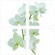 """Stickers carrelage mural """"Fleur d'Orchidée"""""""